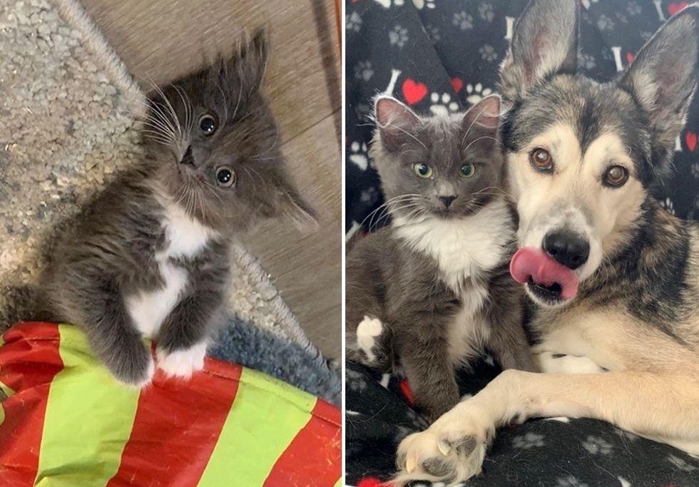 cute kitten, dog, best friends