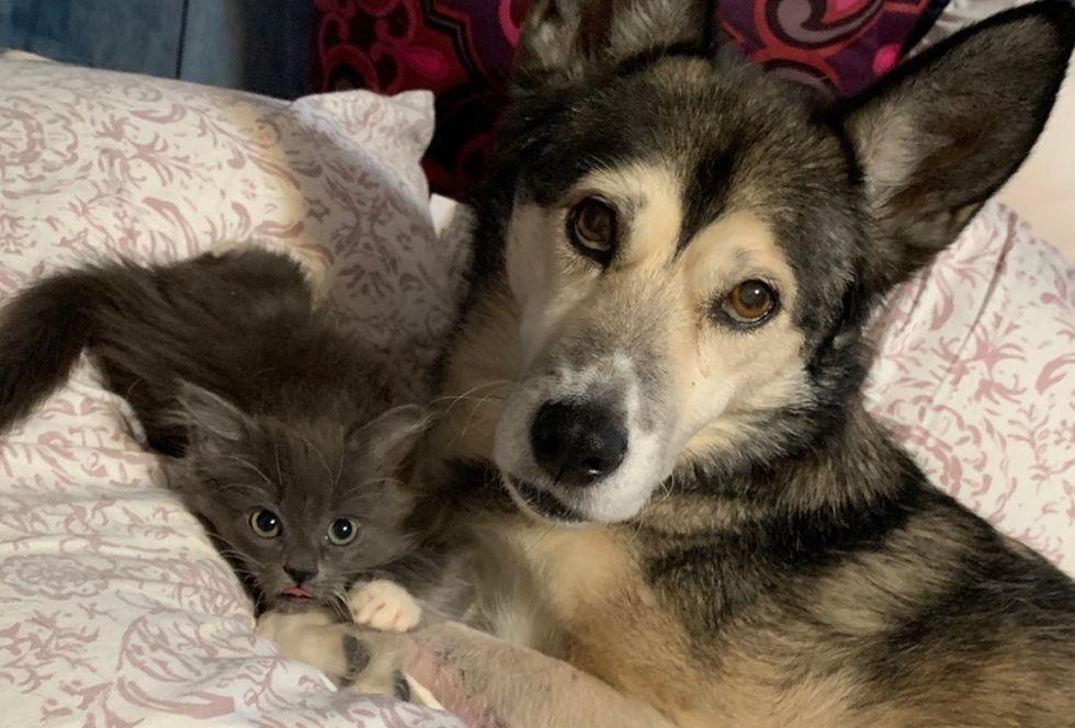 kitten, dog, friends