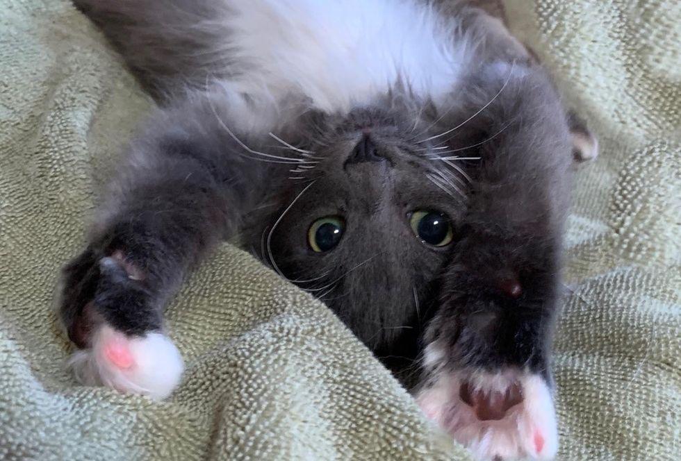 cute kitten, paws