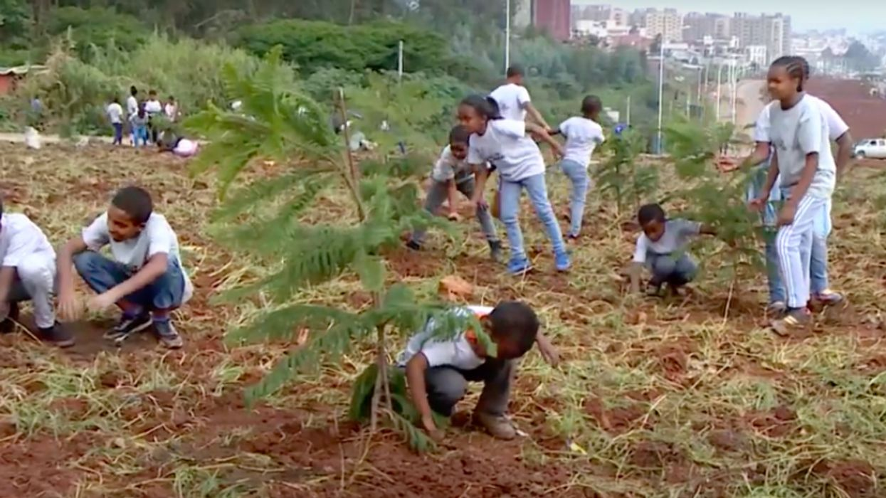 Ethiopia to Plant 5 Billion Tree Seedlings in 2020