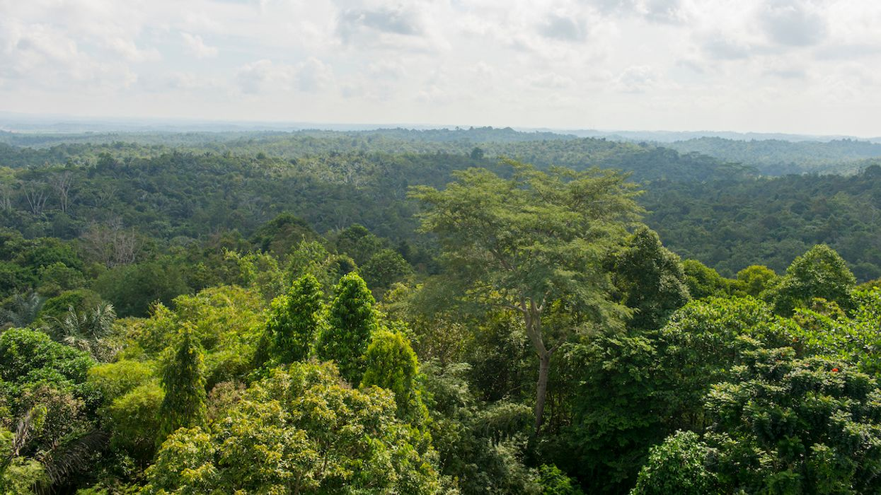 Fighting Poverty Can Also Fight Deforestation, New Study Finds
