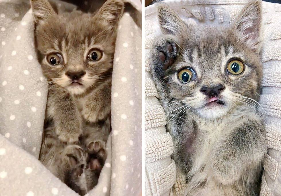cute kitten, cleft nose, special