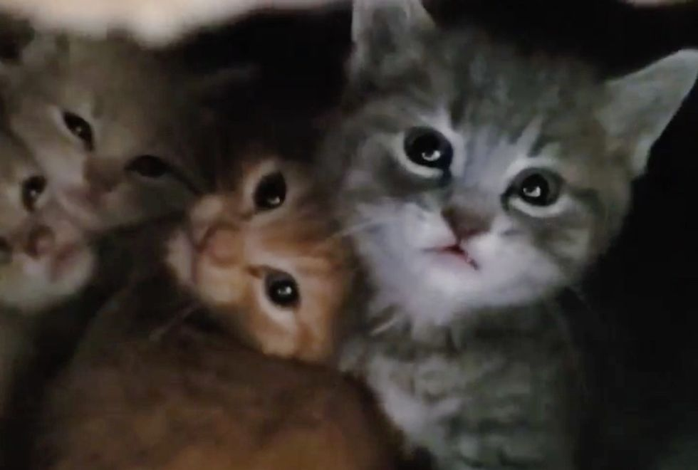 cute, feral kittens, building, rescue