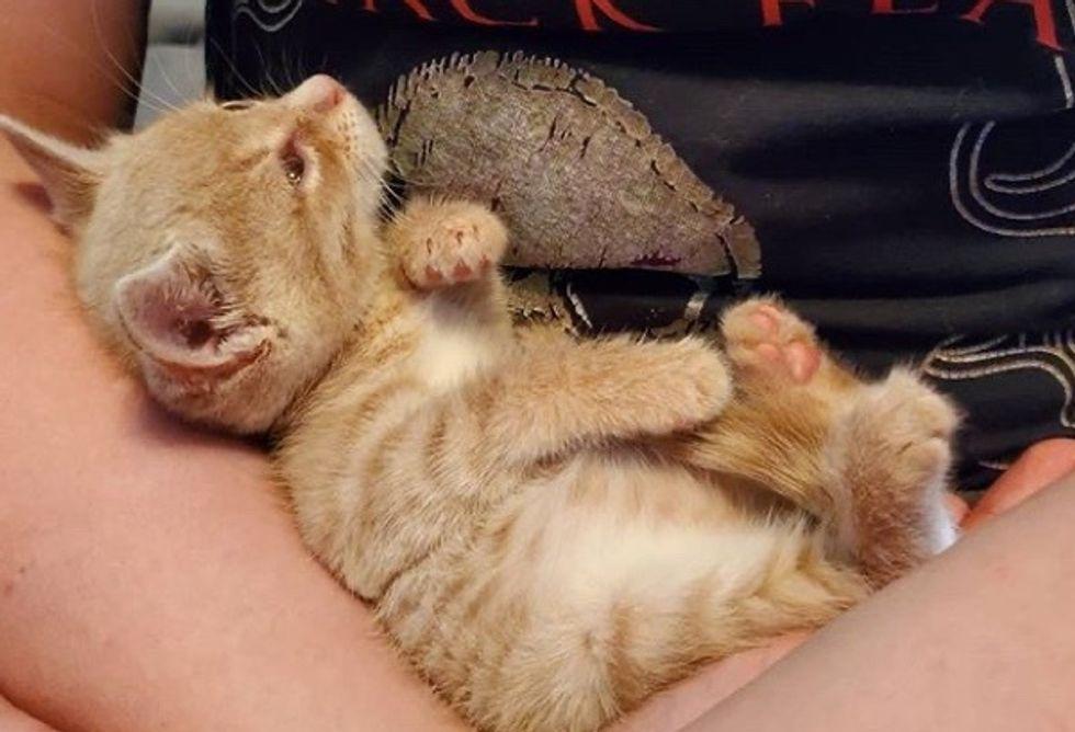 cute, rescue kitten, cuddle