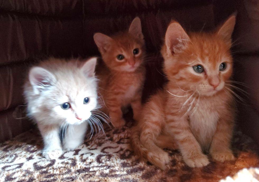 cute, kittens, rescued, ginger kittens
