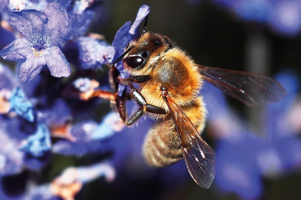 10 Incredible Facts About Bees