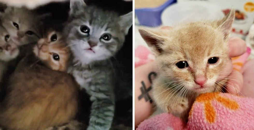 Worker Spots a Kitten Run Under Office Building and Discovers More
