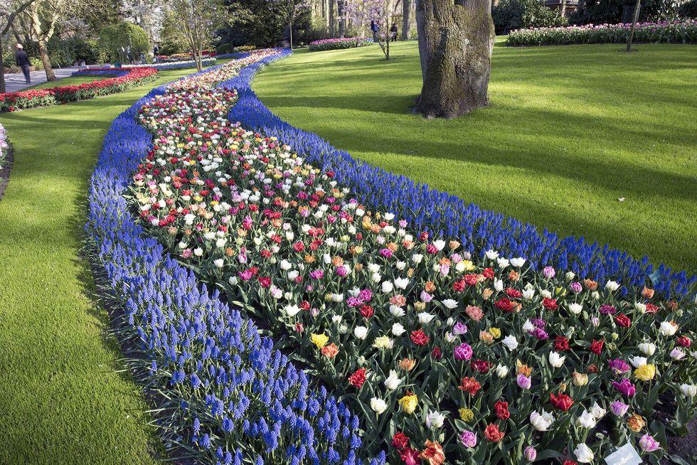 u200bKeukenhof Gardens.
