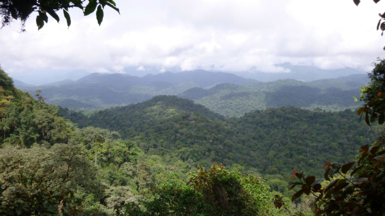 Worried About Biodiversity? End Industrial Activity in the Rainforest