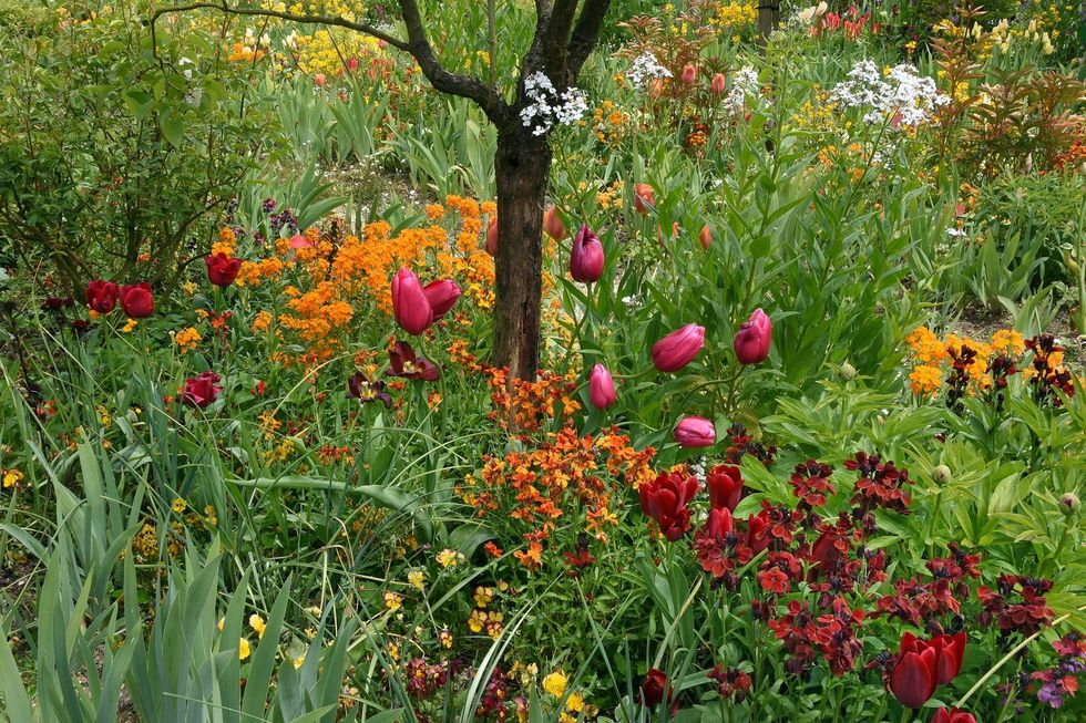 Monet's garden. u200b