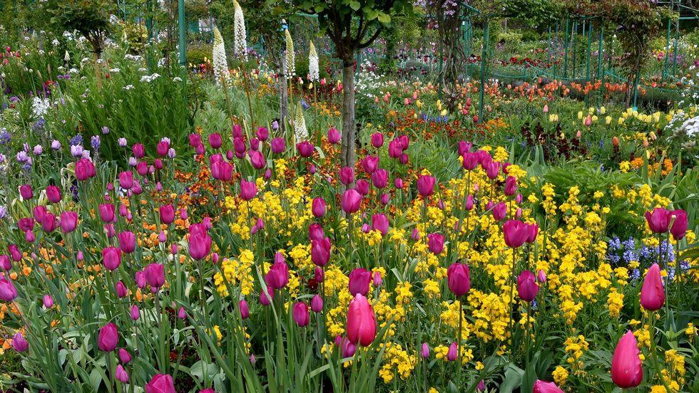 u200bMonet's garden.