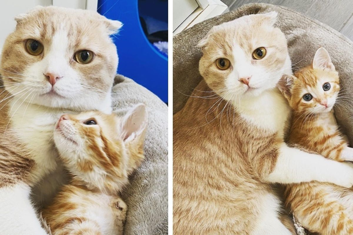 Cat Helps Kittens Thrive at the Vet After He Was Given Second Chance
