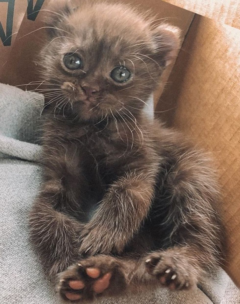 cute, kitten, quill, twisted legs