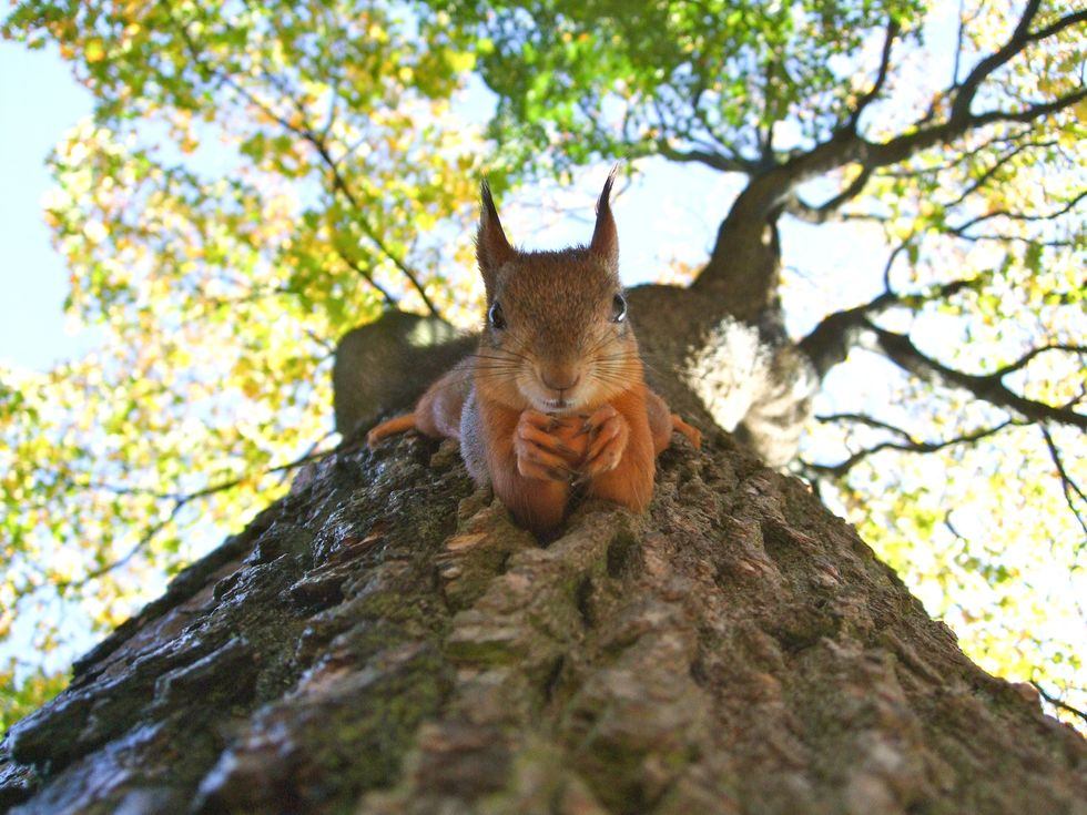 You're not going far from home – and neither are the animals you spy out your window