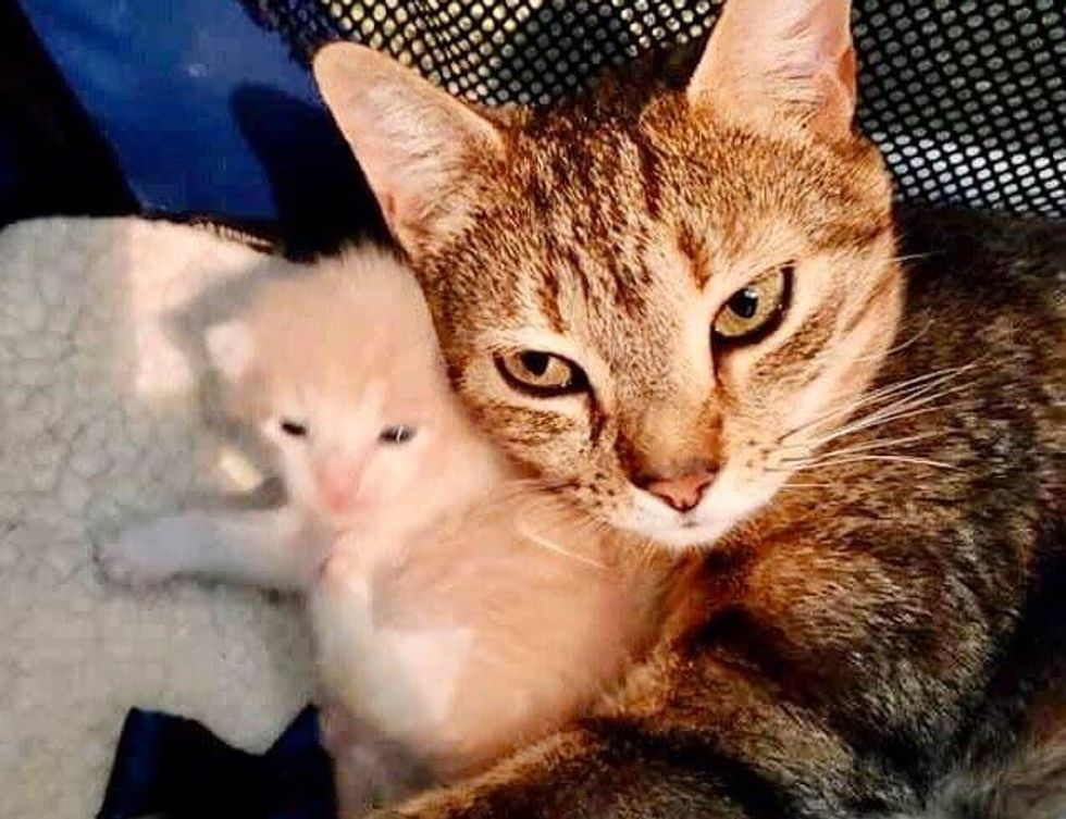 cat mom, cuddling, kitten