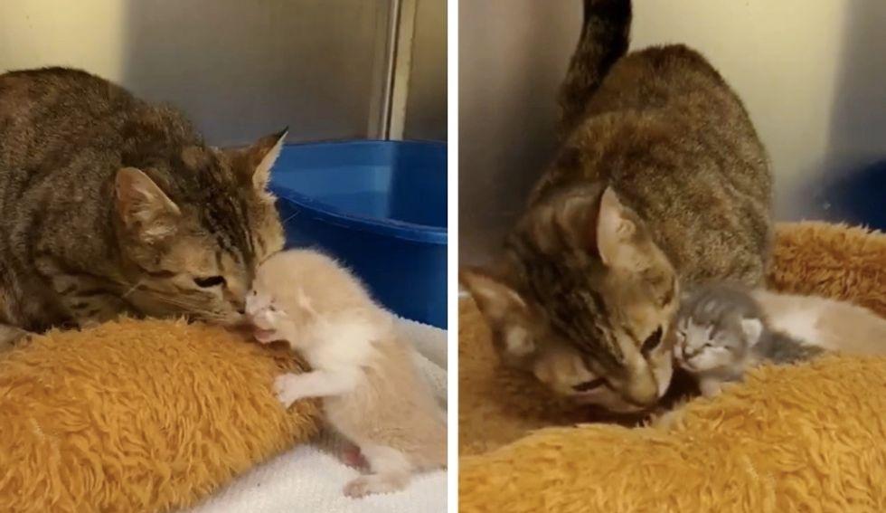 cat, reunion, kittens, shelter