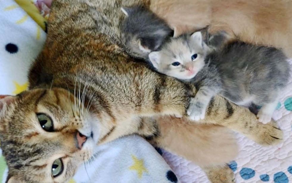 cat, kitten, hug, foster home
