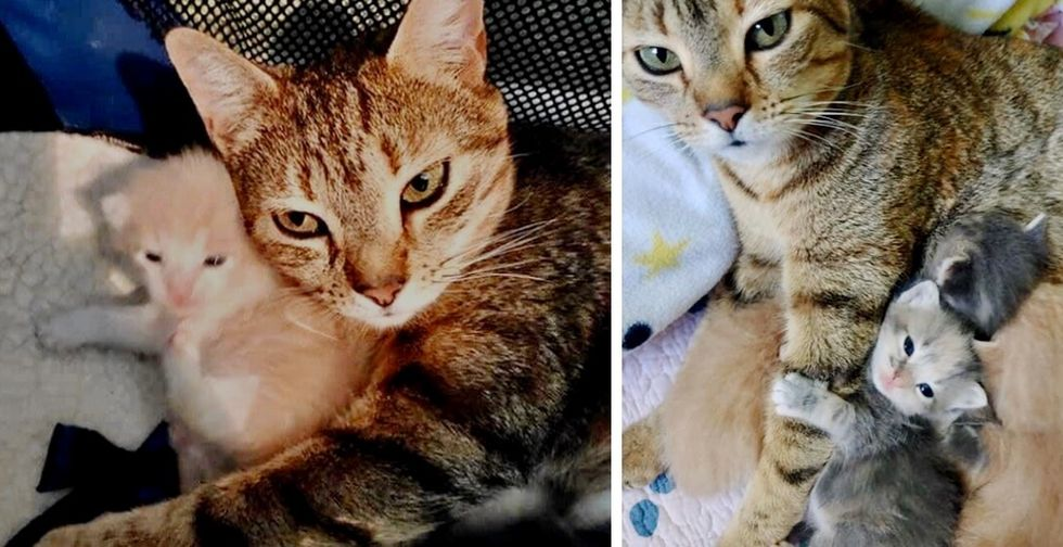 Stray Cat Meows with Joy When Reunited with Her Kittens at Shelter