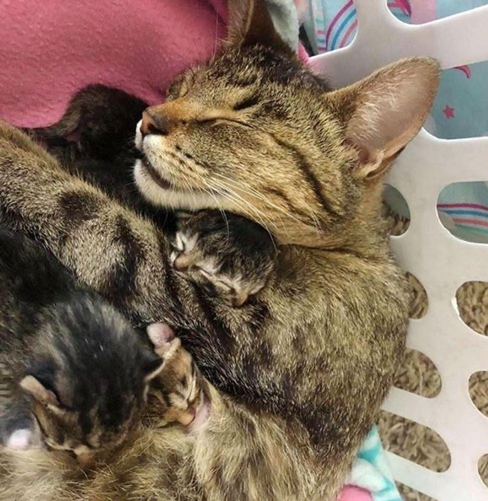 cat, cuddles, two-faced, kitten