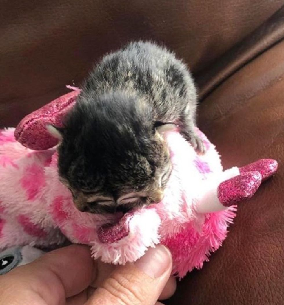 Biscuits, 2-faced, kitten, cuddly toy