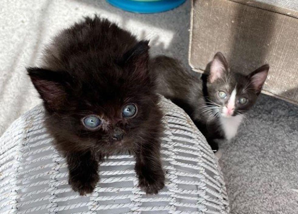 tuxedo kitten, black kitten, best friends