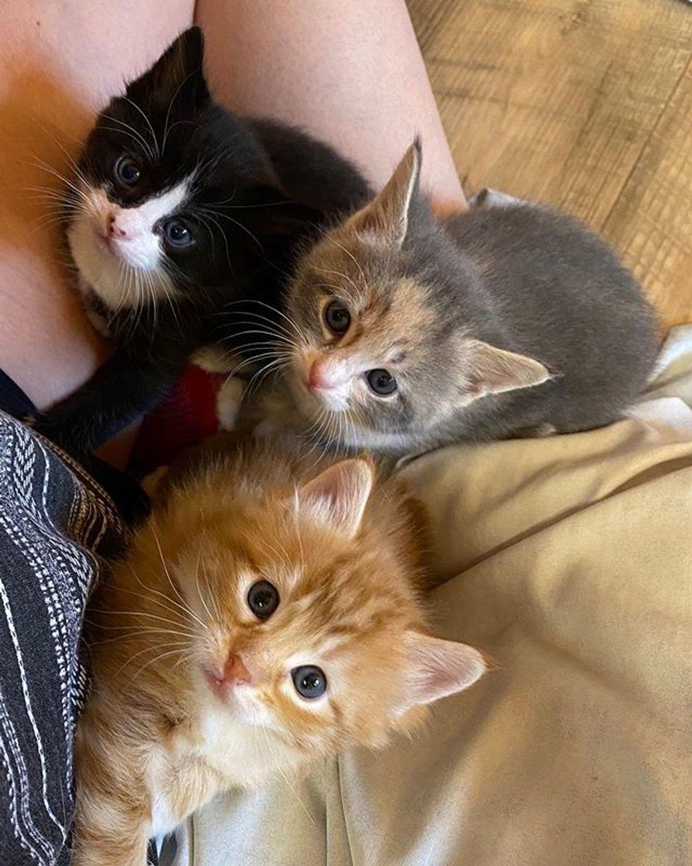 cute kittens, lap kittens