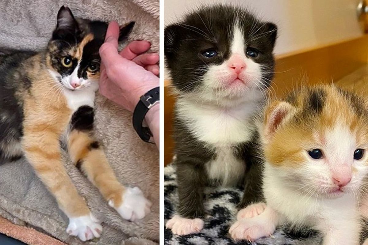 Family Befriended Stray Cat and Discovered She Would Have Kittens
