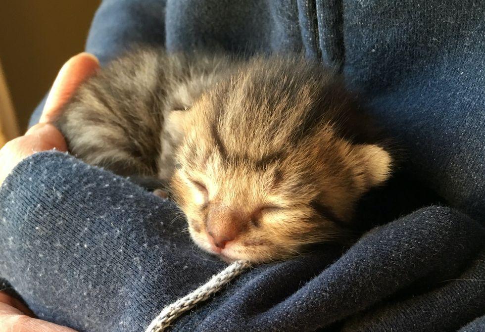 sleeping kitten, cuddling, purr