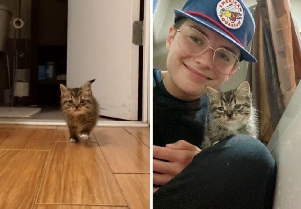 stray kitten, tabby, apartment