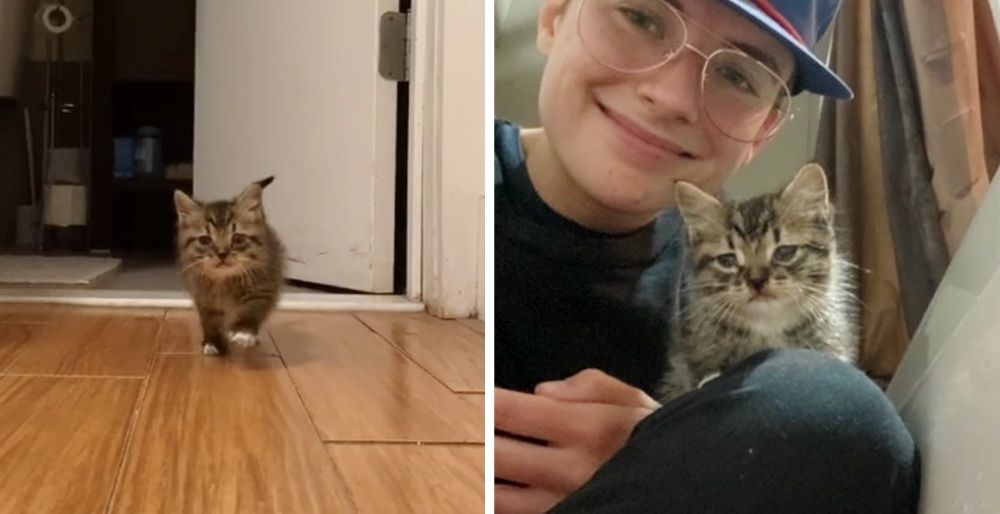 Stray Kitten Comes Running into Apartment and Moves Right in