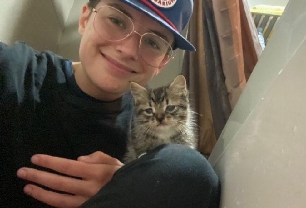 stray kitten, tabby kitten
