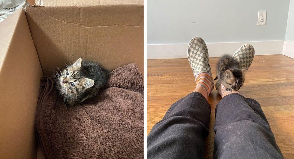 stray kitten, move into apartment