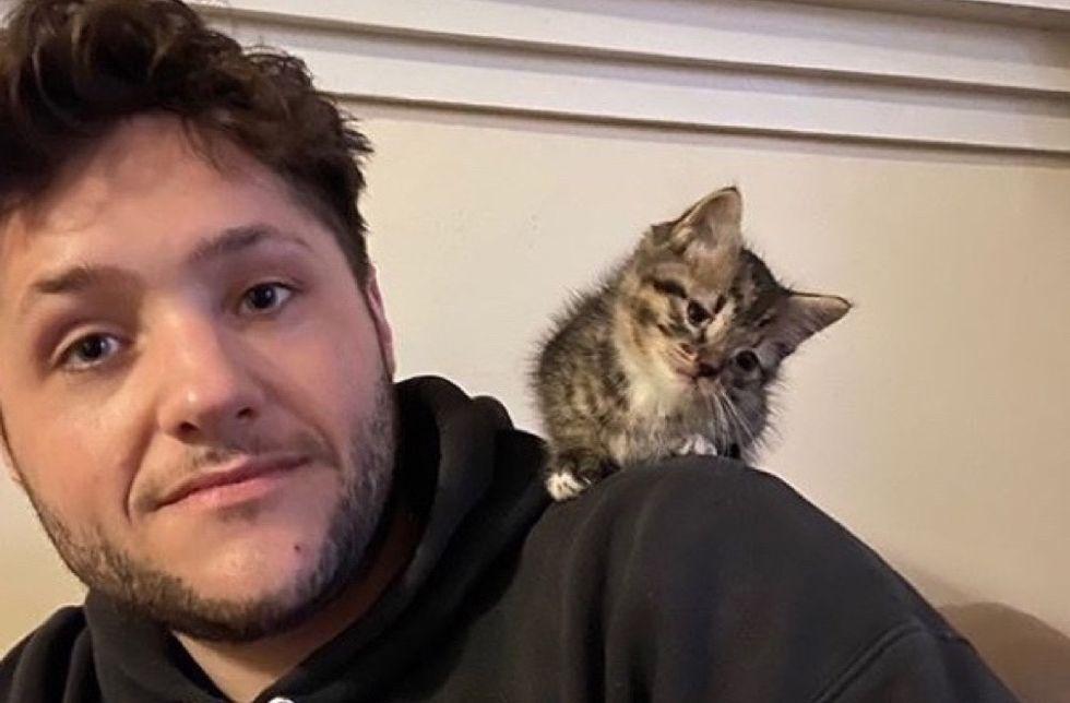 shoulder cat, shoulder kitten
