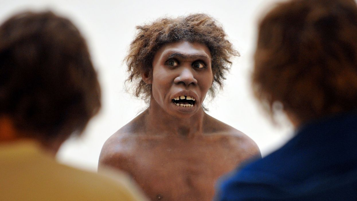 What Neanderthal bones can tell us about their sex lives