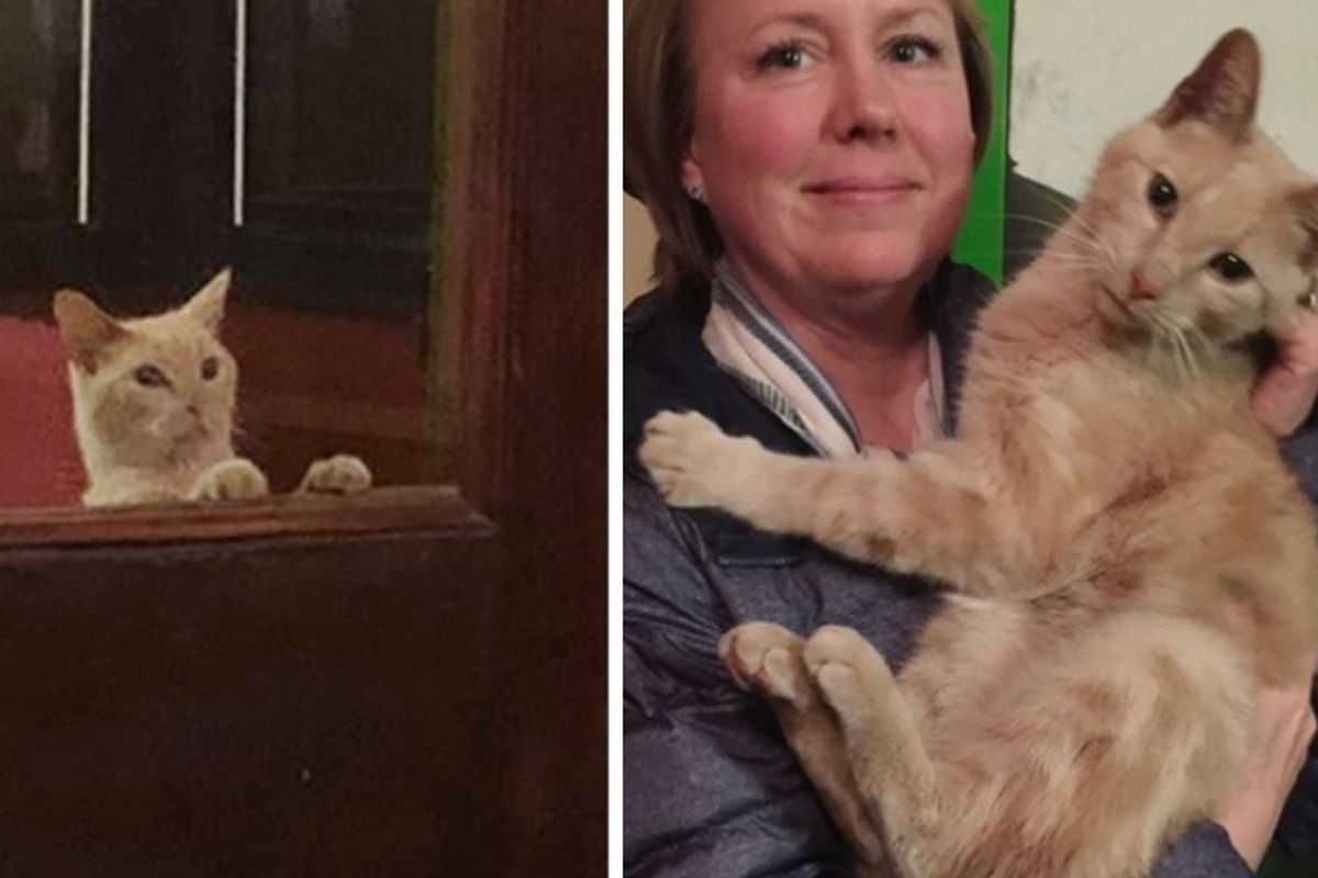Couple Went Out for Dinner and Came Home with Sweetest Cat in Their Arms