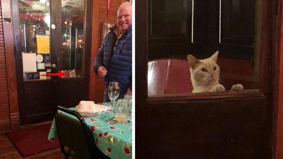 stray cat, waiting by restaurant door
