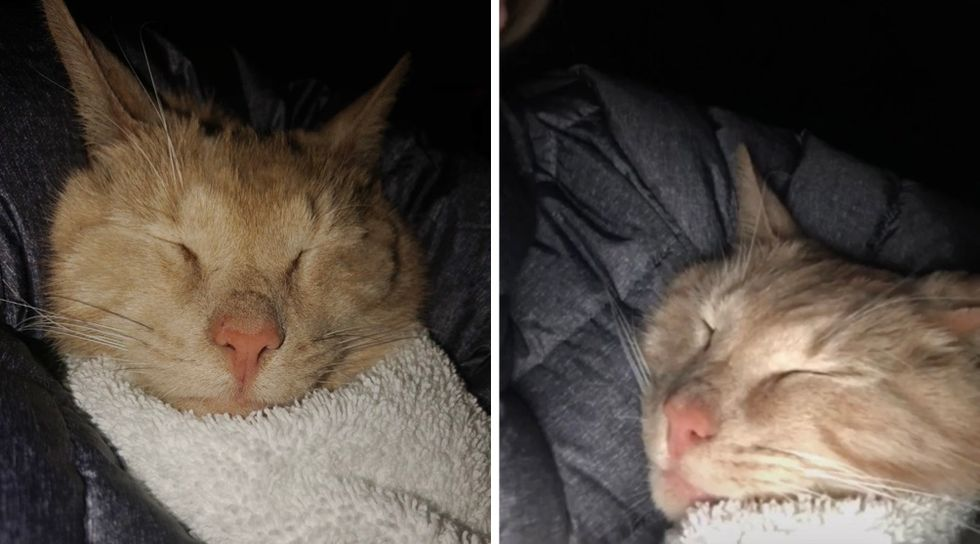 Lucky the cat, happy, sleeping