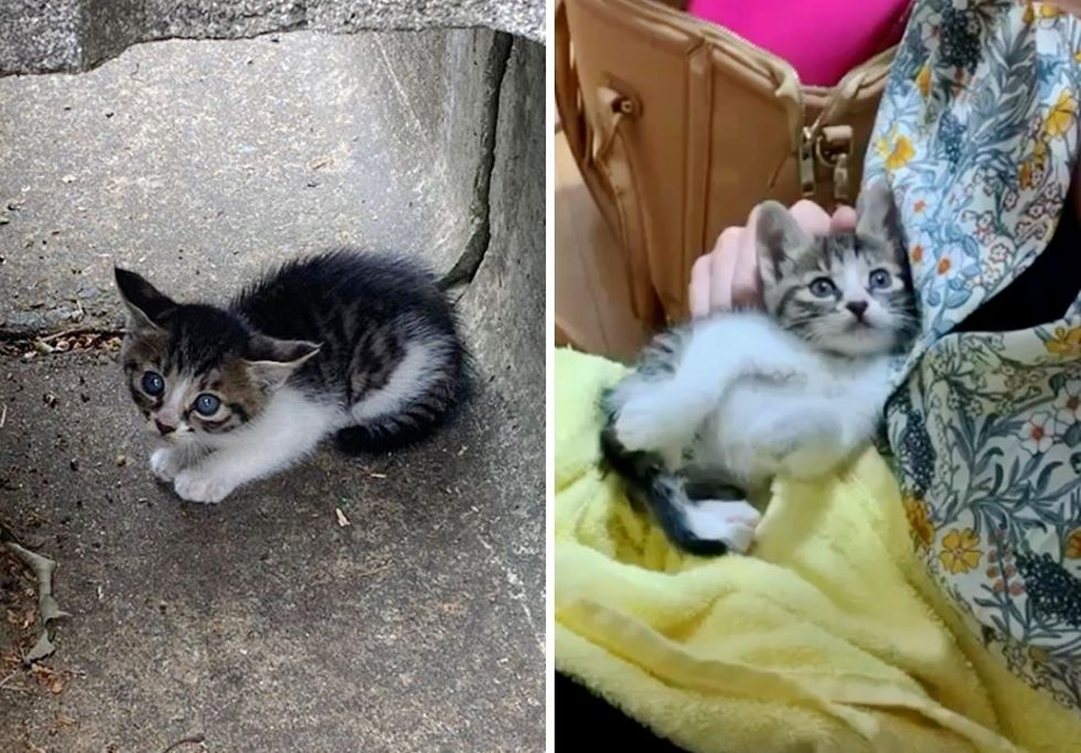 kitten rescue, drainage ditch, road