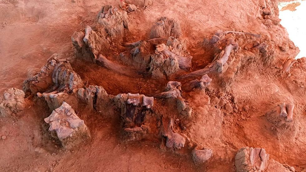 A mammoth graveyard: 60 pachyderm skeletons discovered together in Mexico