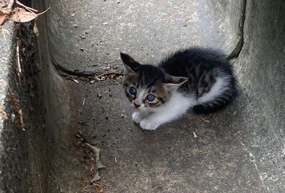 tabby kitten, drainage ditch, hiding