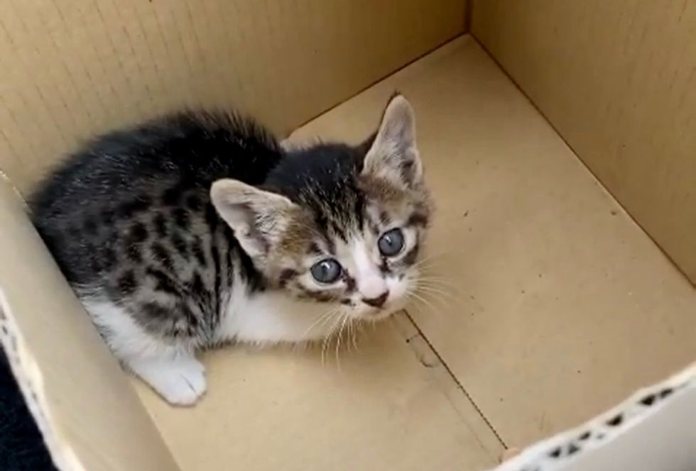 stray kitten, cardboard box