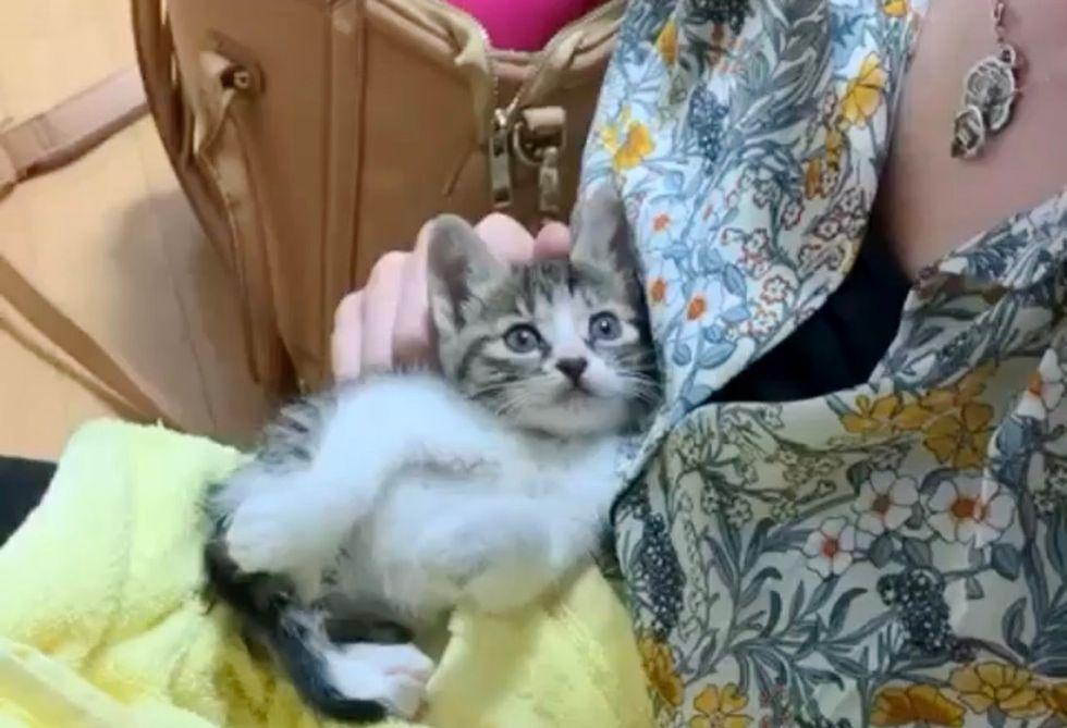tabby kitten, cuddles