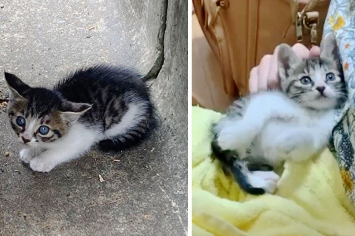 Kitten Found in Drainage Ditch Gets New Place of Her Own