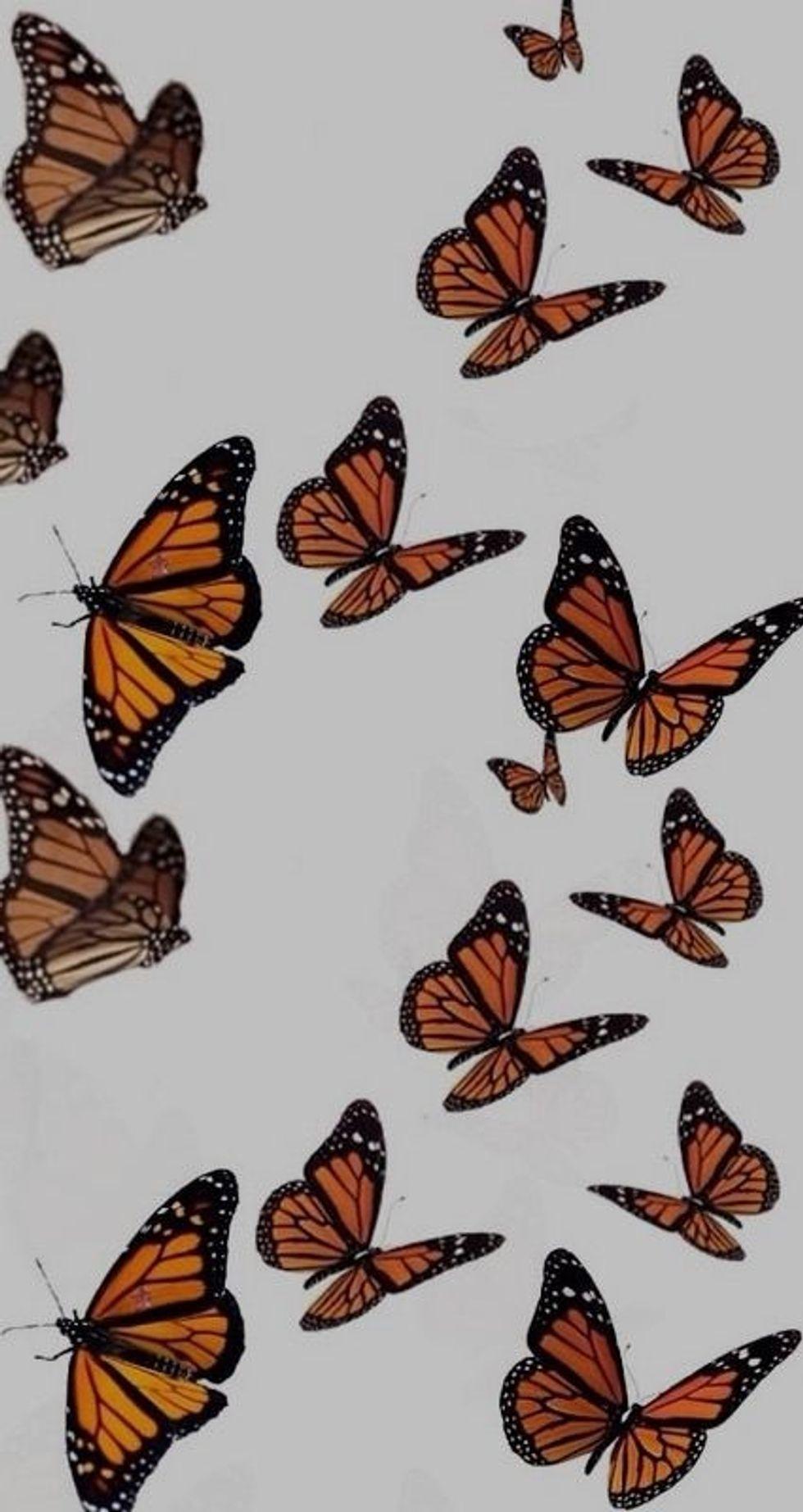 The Metamorphosis: A Poem About My Mental Evolution