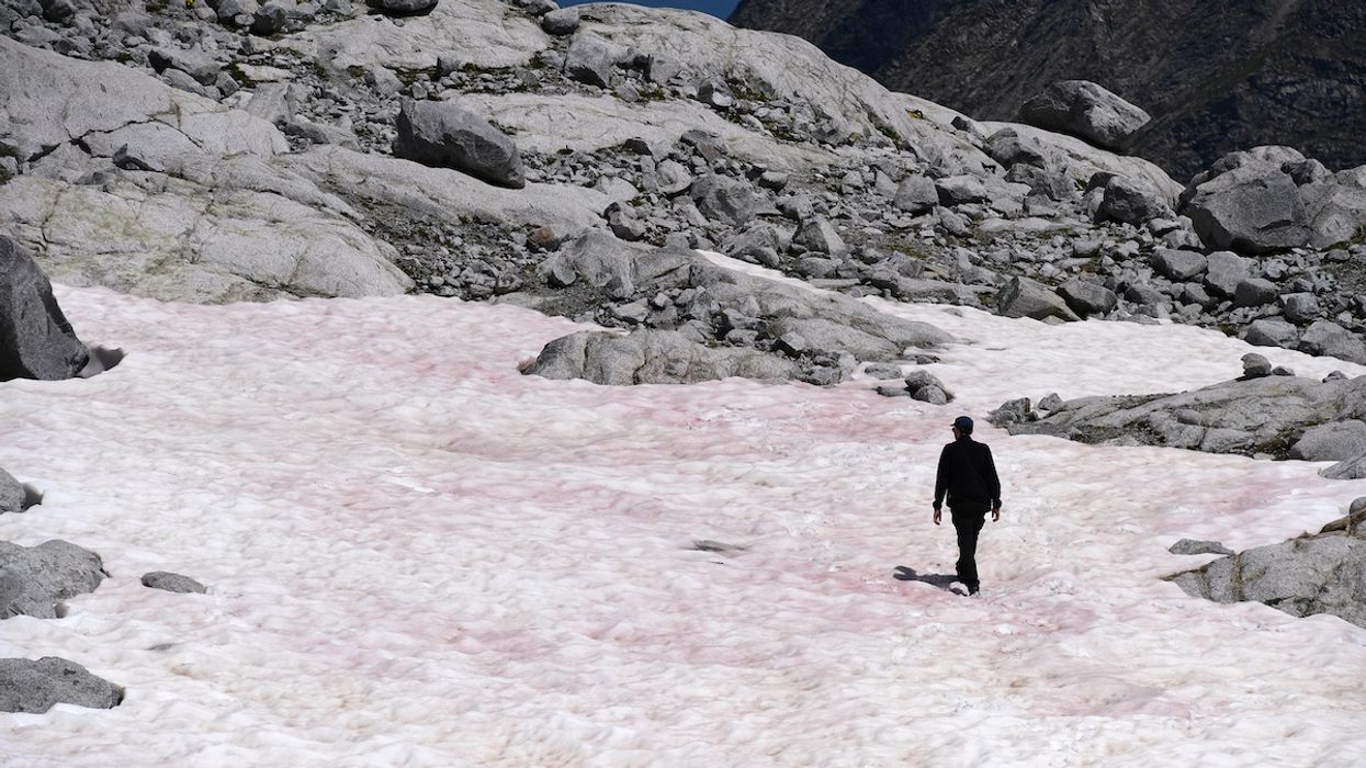 Pink Snow in the Italian Alps Means Trouble, Scientists Say