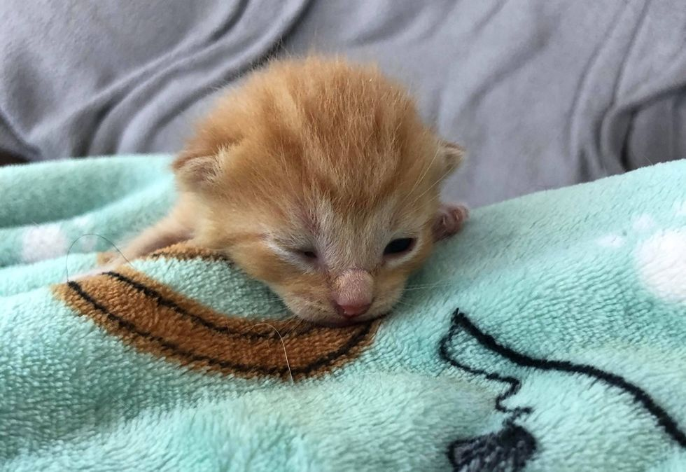 tiny kitten, eyes open