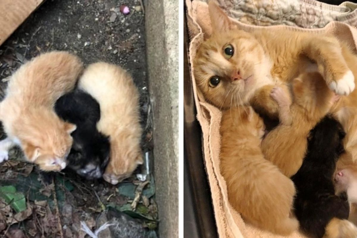 Stray Cat Comes Running When Rescuers Find Her and Her Kittens Outside Apartment