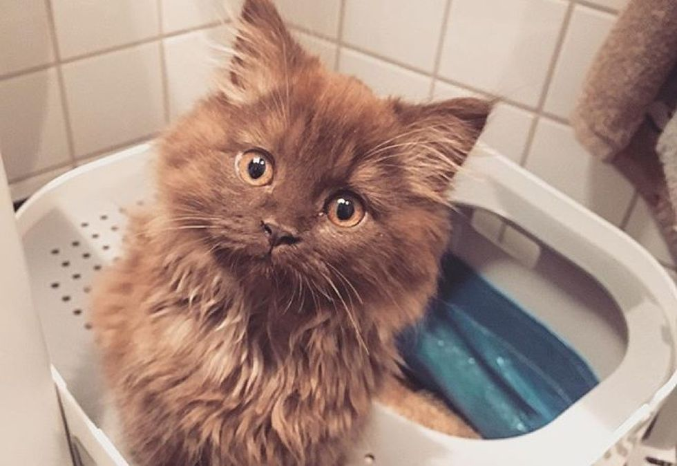 cute kitten, fluffy cat
