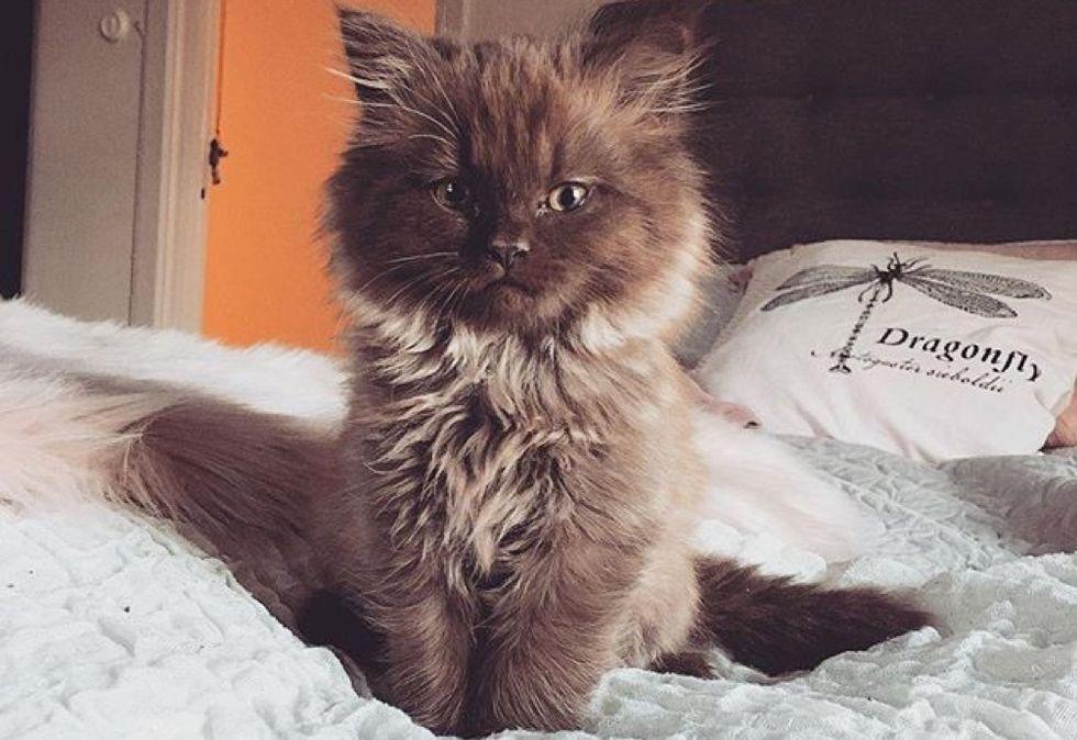 fluffy kitten, cute