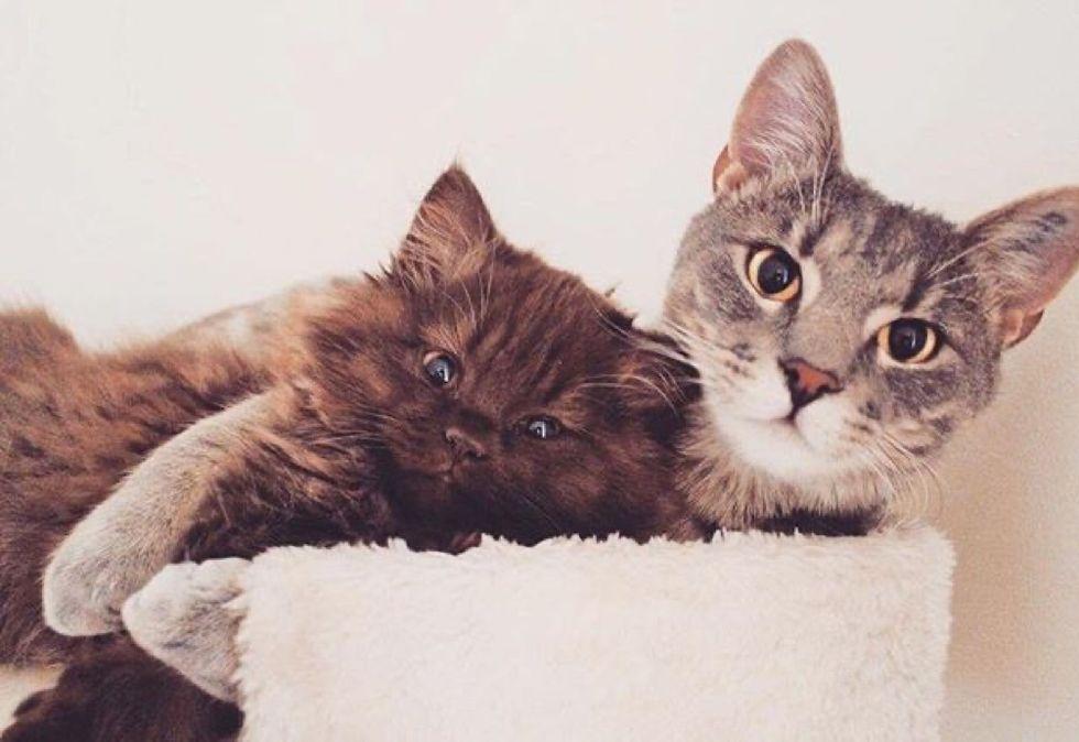 best friends, cat, kitten